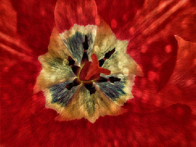 Photograph - Red Tulip Abstract by Fiona Messenger