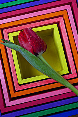 Red Tulip In Box Art Print by Garry Gay