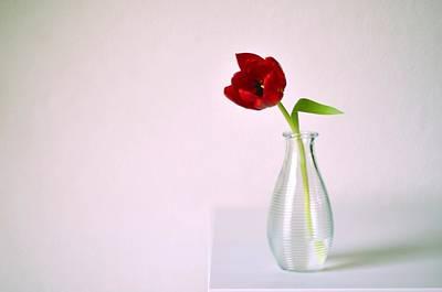 Rotterdam Photograph - Red Tulip In Glass Vase by Photo by Ira Heuvelman-Dobrolyubova