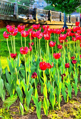 Photograph - Red Tulips by Michael Goyberg