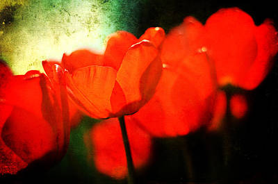 Photograph - Red Tulips by Rebecca Sherman