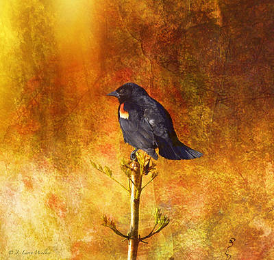 Digital Art - Red-winged Blackbird Abstract by J Larry Walker