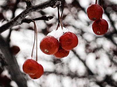 Photograph - Red Winter Berries by Laura Kinker