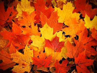 Photograph - Red Yellow And Orange Fallen Maple Leaves by Chantal PhotoPix