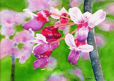 Redbud Art Print by Debra Spinks
