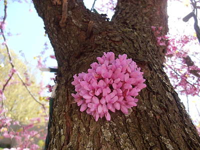 Photograph - Redbud Tree Two Thousand Twelve by Tim Donovan