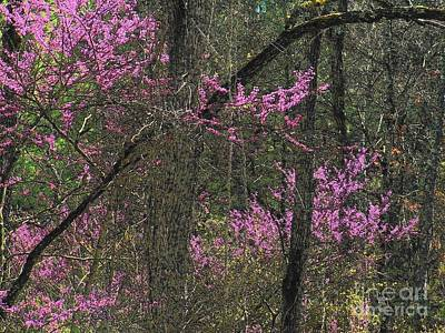 Redbuds In The Woods Print by Joyce Kimble Smith
