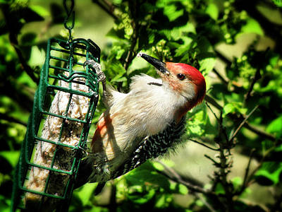 Photograph - Redheaded Woodpecker by Scott Hovind