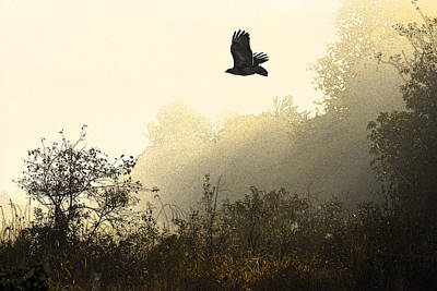 Red Tail Hawk Digital Art - Redtail Flight by Michael Bartlett