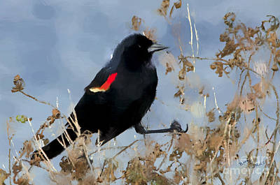 Blackbird Photograph - Redwing Blackbird by Betty LaRue