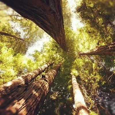 Woodland Wall Art - Photograph - #redwood #ca #california by Michael Lynch