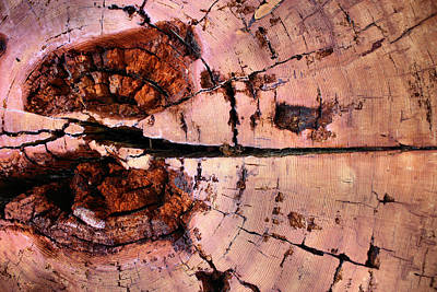 Photograph - Redwood Cross Section by Kristin Elmquist