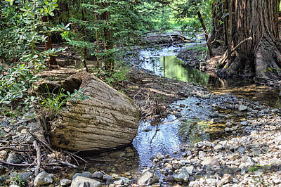 Photograph - Redwood Log And Stream by Peter Dyke