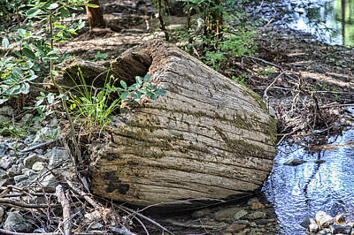 Photograph - Redwood Log by Peter Dyke