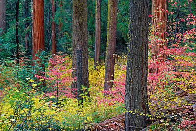 Redwoods And Dogwoods Art Print by Tim Fleming