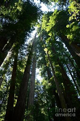 Photograph - Redwoods by Cassie Marie Photography