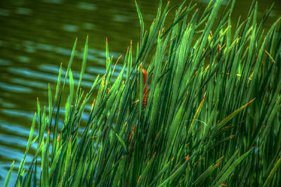Reed Amoung Grass Art Print by Ronald T Williams