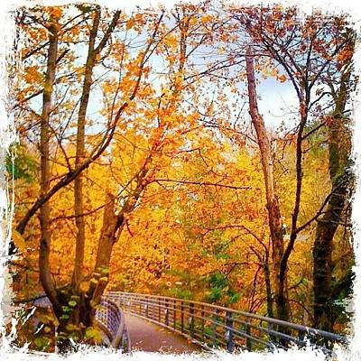 Apple Photograph - Reed College Canyon Bridge To Campus by Anna Porter