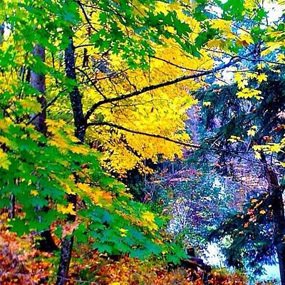 Apple Wall Art - Photograph - Reed College Canyon Fall Leaves II by Anna Porter