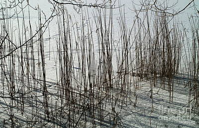Photograph - Reed Lake by Michael Canning