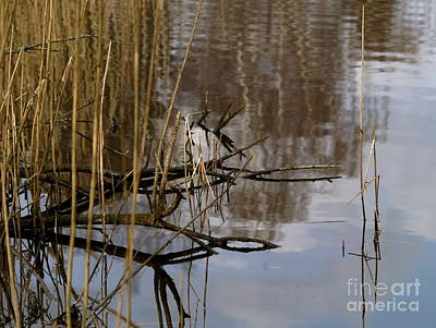 Photograph - Reed Reflections by Michael Canning
