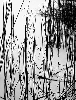 Photograph - Reeds In The Snow by Michael Canning