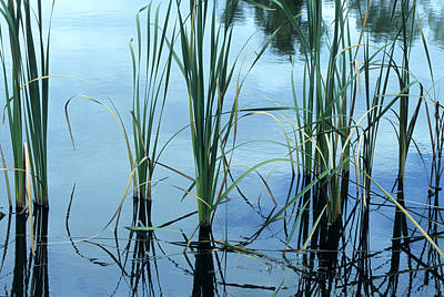 Photograph - Reeds In The Water by John Brink