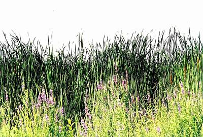 Reeds Lake Grass Art Print by Suzanne Fenster
