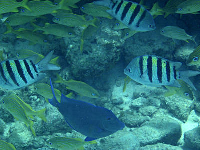 Underwater Photograph - Reef Fish by Kimberly Perry