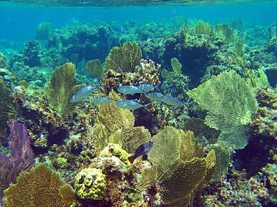Photograph - Reef Life by Li Newton