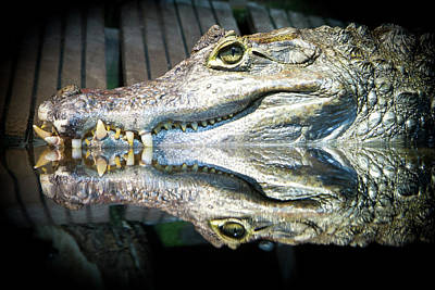 Part Of Photograph - Reflect Crocodile by Oric1-Flickr