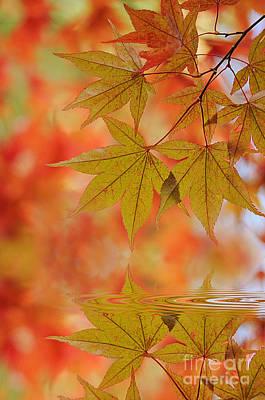 Reflect On Autumn Art Print by Jacky Parker
