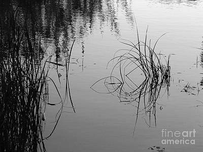 Photograph - Reflected Grasses by Mary Attard