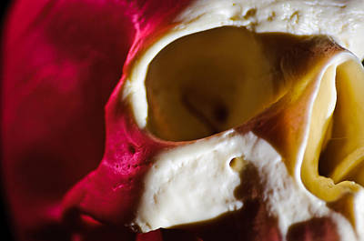 Human Skull Photograph - Reflected Light by Alex Rios