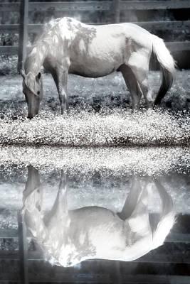 Digital Art - Reflecting Dreams by Mary Almond