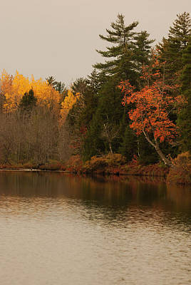 Maine Nature Photograph - Reflecting On Autumn by Susan Capuano