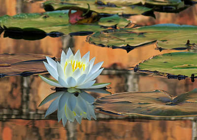 Art Print featuring the photograph Reflecting Pond by Deborah Smith