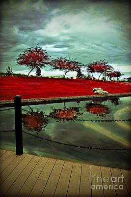 Photograph - Reflection by Afrodita Ellerman
