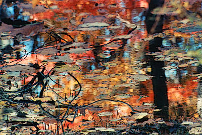 Reflection Art Print by Barbara Middleton