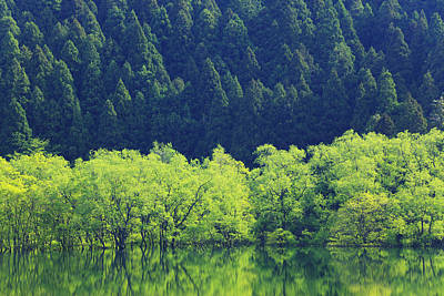 Reflection Of Forest On Water Art Print by Imagewerks
