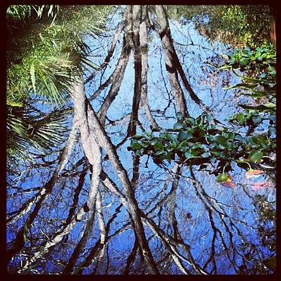 Cool Photograph - #reflection #tree #cool #popularphoto by Mandy Shupp