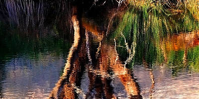 Photograph - Reflections by Michelle Wrighton