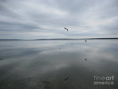 Prince Albert National Park Photograph - Reflections Of Birds On A Lake by Kelsey Horne