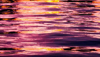 Photograph - Reflections Of Dusk by Christy Usilton