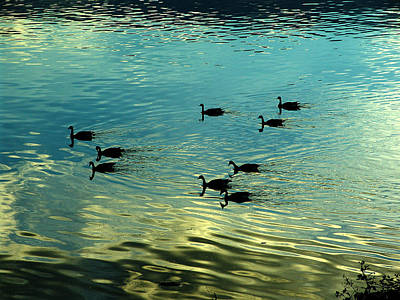 Photograph - Reflections Of Geese by George Cousins