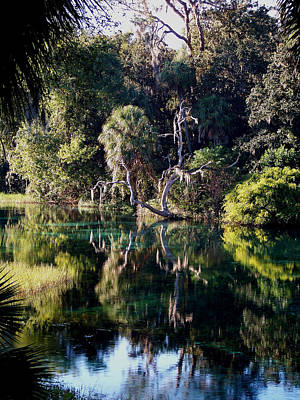Photograph - Reflections Of Rainbow Springs by Judy Wanamaker