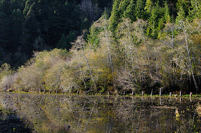 Reflections On Marshall Pond Art Print by Greg Nyquist