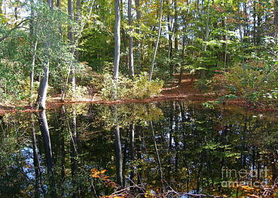 Photograph - Reflections On The Pond  by Nancy Patterson