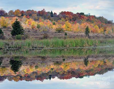 Photograph - Reflective Beaver Pond by Dan Friend