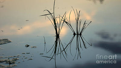Photograph - Reflexion by Mareko Marciniak